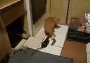 Tüh senin kalıbına Tırsak Kedi