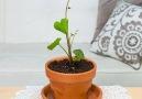 Turn your veggies into pretty house plants!