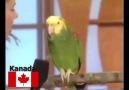 Ülkelere göre konuşan papağanlar instagram.comamelos34