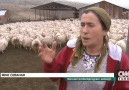 Ülkemizdeki ve yabancı ülkelerdeki çiftçiler arasındaki farklar