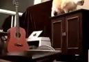 Umursamaz kedi!