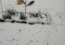 Und ihr so Lotta liebt Schnee Gerne teilen und