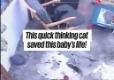 UNILAD - Cat Saves Baby From Falling Down Stairs Facebook