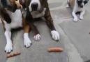 Uyanık köpek  :)