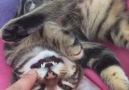 Uyuma şekliyle sosyal medyaya düşen kedi