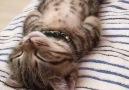Uyuyuşların en güzeli