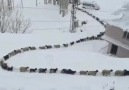 VAN BÜYÜKŞEHİR - En delikanlı mevsimdir kış. Yüzüne yüzüne...