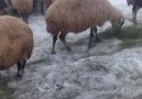 VAN BÜYÜKŞEHİR - Köylerde Zorlu Kış Mücadelesi..