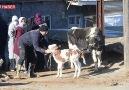 Veteriner TV - **Türkiye Deprem mağduru hayvanlara...