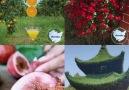 Video Saati.TV - gardens from heaven very generous Facebook