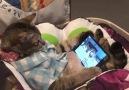 VT - Cat watching iPad Facebook