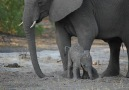 Well be watching these baby elephants on repeat until the end of time.