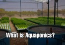 When people ask you What is Aquaponics SHARE this video with them.