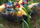 Wildlife - Super Beautiful & Colorful Birds Facebook