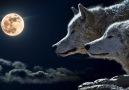 Wolf Totem Spirit (Börü Ongun Ruhu)... - Great Turanian Spirit