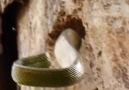 Woodpecker vs Snake