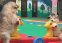 Woof Woof - Adorable Malamute Puppies Playing On A SeeSaw At Day Care Facebook