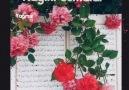 Yağmur Damlası - Günaydın Hayırlı Nurlu Cumalar...Rahman...