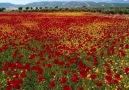 Yaşamsal Gelişim - Güzel Manzaralar Yaşamsal Gelişim Facebook