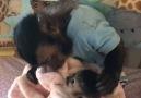 Yavrusunun üzerine titreyen anne maymun )