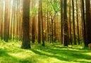 Yeryüzü - Mevsimlik Ormanlar
