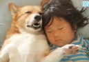 Yok böyle şirinlik! Karşınızda dünyanın en sevimli uyku arkadaşları