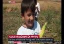 Yozgat Aydıncık Bağrıbütün Kavunu TRT... - Trt haber yozgat
