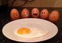 Yumurta Arkadaşlar