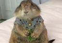 Yüreği hayvan sevgisi ile dolu olan tüm canseverler için videomuz )