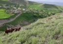 Zaten bu gurbetlik yedi bizleri - Doğunun Yıkılmaz Kalesi Erzurum
