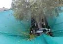 zeytin toplama makinası