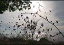 zglztrk - Söz Müzik Öz Gül