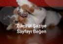 Zümrüt Şaziye - Zümrüt Şaziye Yalan Dünya dizisinde Ebru...