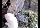 Annesine seslenen köpek  )