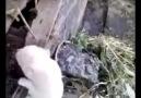 Annesine seslenen köpek Süper yaaa :D :D