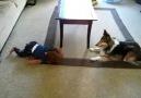 Bebeği Güldürmeye Çalışan Köpeğin Maskaralıkları...K...