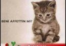 Ben Özlemedim ki Seni Kedi Özledii-Candan Erçetin''''C_oZ (: