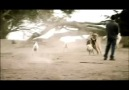 Cesar Millan ile Köpeklere Fısıldayan Adam