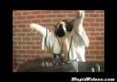 DJ Kedi Tekir :)))))CATT:)
