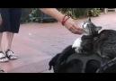 Dog, Cat, And Rat...:)__Köpek, kedi, fare..:) [HQ]