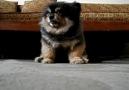 Dünyanın 1 numaralı bekçi köpeği :) Gözünü bile kırp...