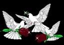 1 Eylül'de barışın sesi yükselecek! [HQ]