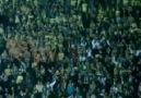 Fenerbahçe Taraftarları Tezavurat