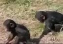 Hayvanlarda Annelik İçgüdüsü
