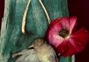 Hüznün Kuşları--CEMAL SÜREYA