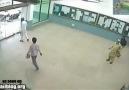ilk Kez otomatik kapı gören adam :)