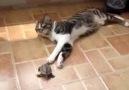 Kedi İle Kaplumbağanın Aşkı :)
