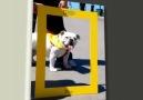 Köpeklere Fısıldayan Adam Tanıtım Filmi