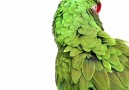 Kuşlar .. [HD]