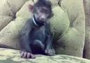 maymunu gıdıklarsan :)